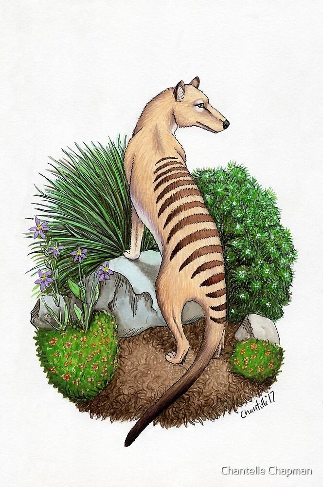 Thylacine by rjdaae