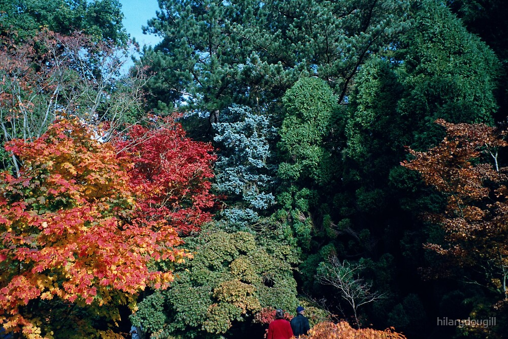 glorious trees by hilarydougill