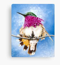 Costa's Hummingbird perched on the branch Canvas Print