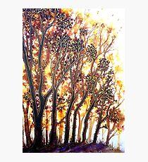 Autumn Begins - Trees Photographic Print