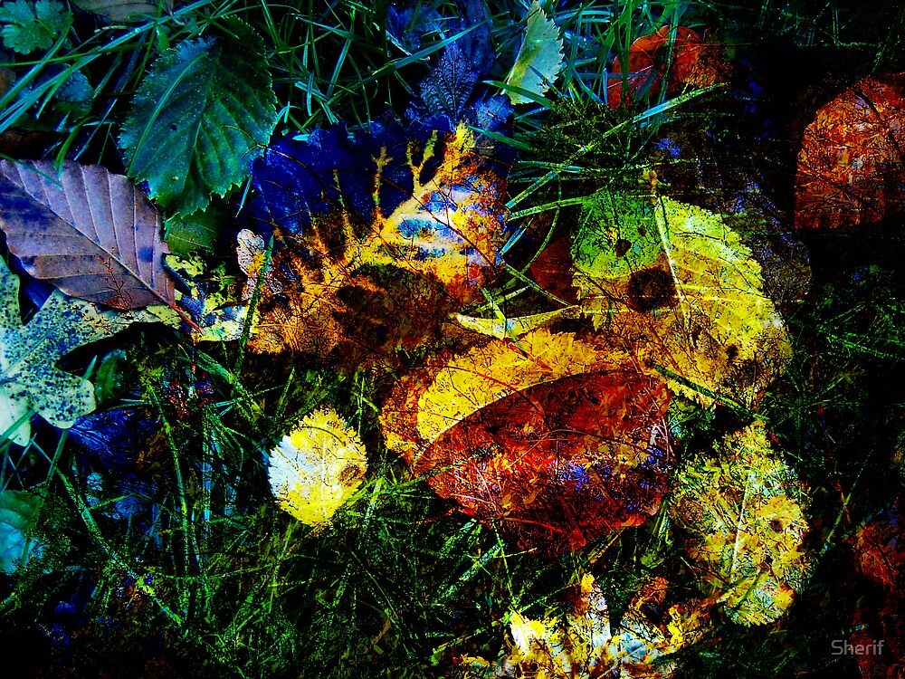 Fallen Leaves by Sherif