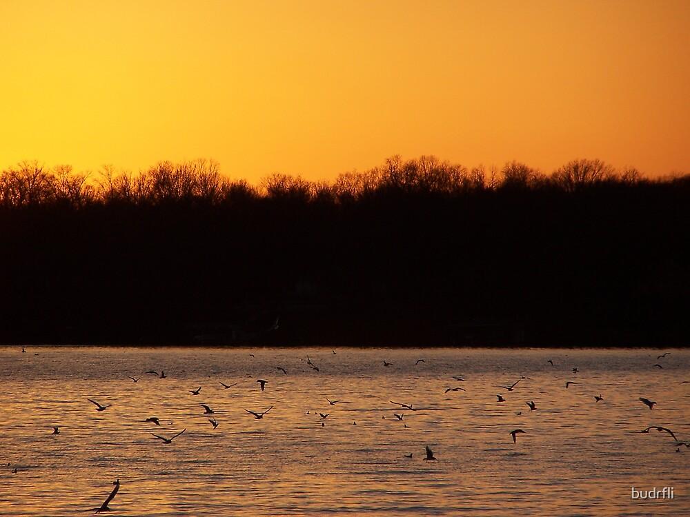 evening peace by budrfli