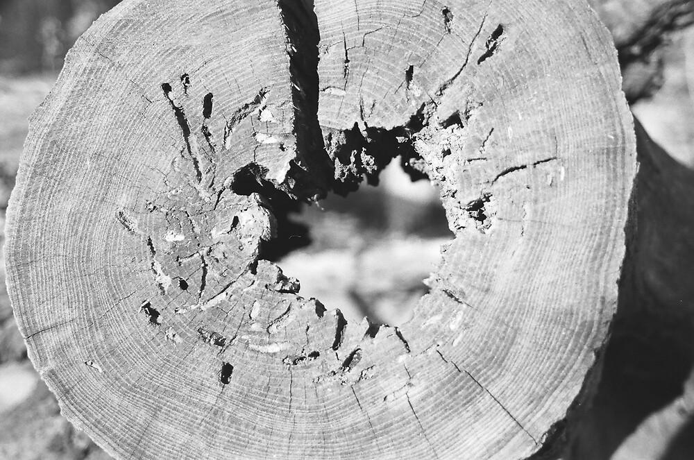 stump by Darwin Deleon