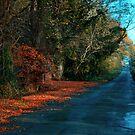 Autumn  by Niamh Harmon