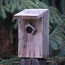 Birdhouse by Jamie Goolsby