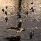 Flight by Niamh Harmon