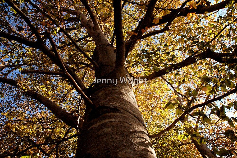Fall Tree by Jenny Wright