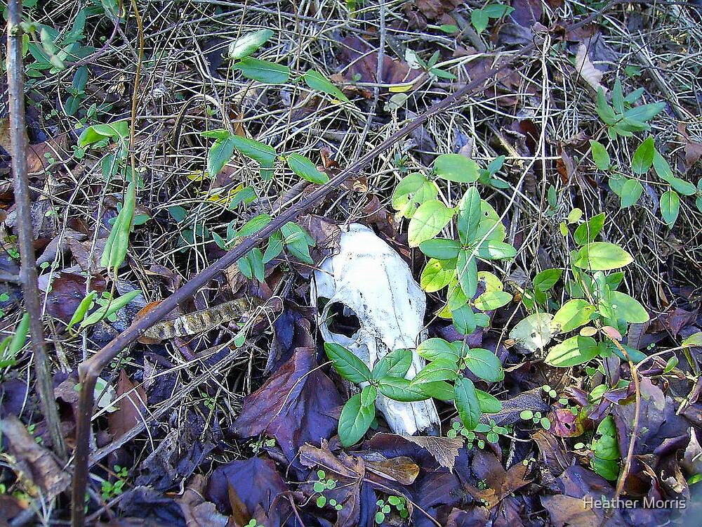 Deer Skull by Heather Morris