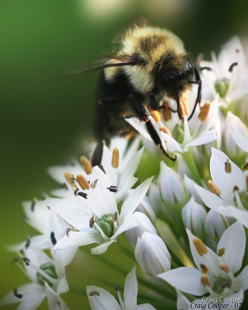 Bumble Bee III by Craig Cooper