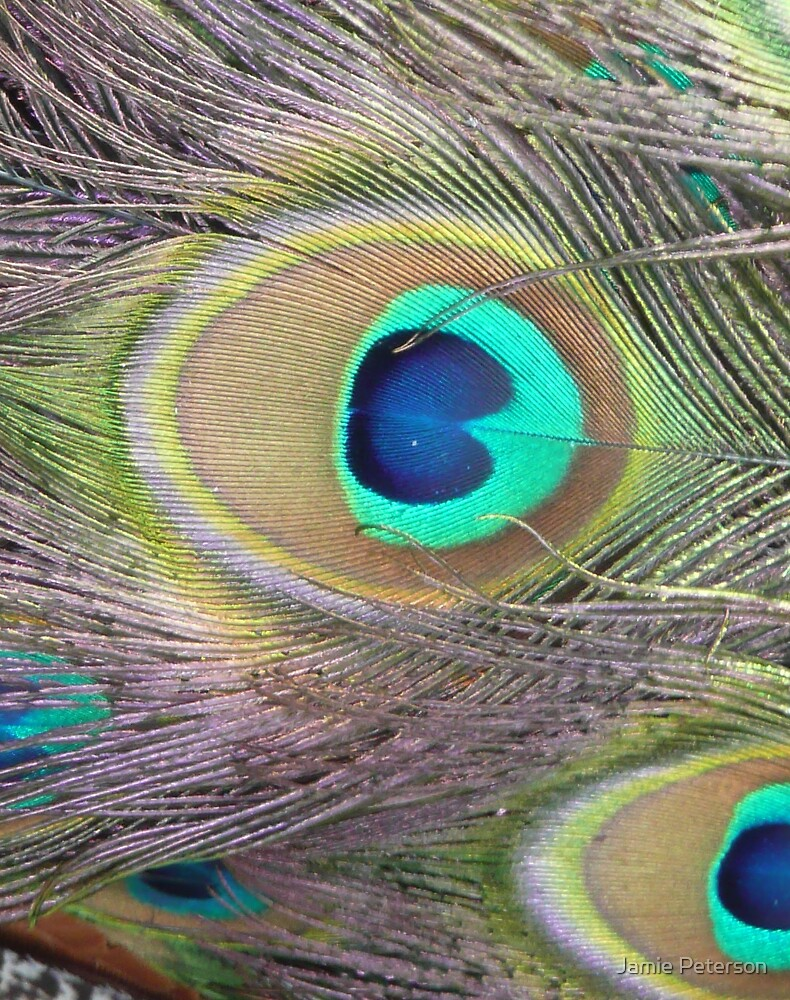 The Eye by Jamie Peterson