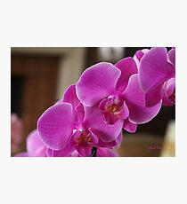 Easter Orchids Photographic Print