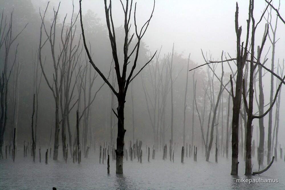 stumps by mikepaulhamus