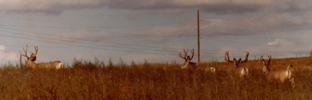 Bucks at Belle Ayr Mine by Susan Kiplinger