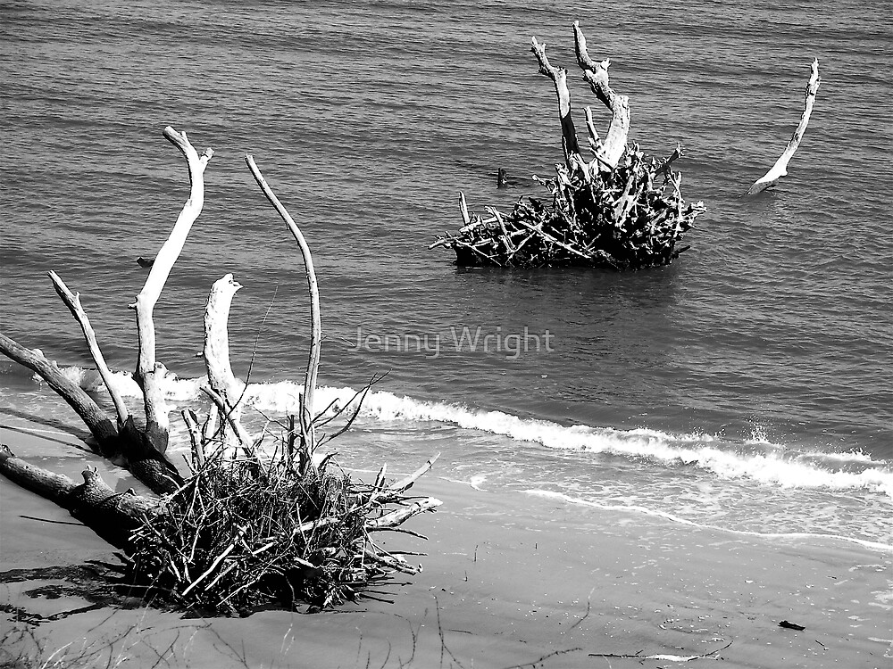 Erosion on Poet's Beach by Jenny Wright