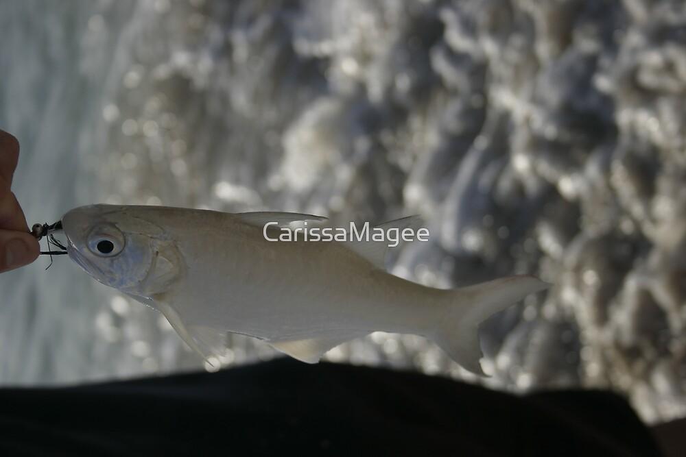Ladyfish by CarissaMagee