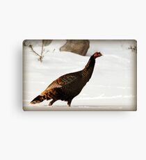 Wild Turkey After Snowstorm Canvas Print