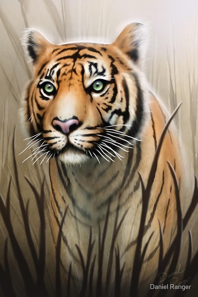 Tiger by Daniel Ranger
