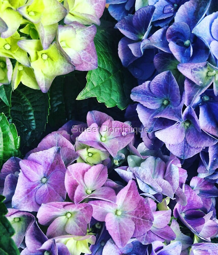 Floral - Gorgeous Hydrangea by SweetDominique