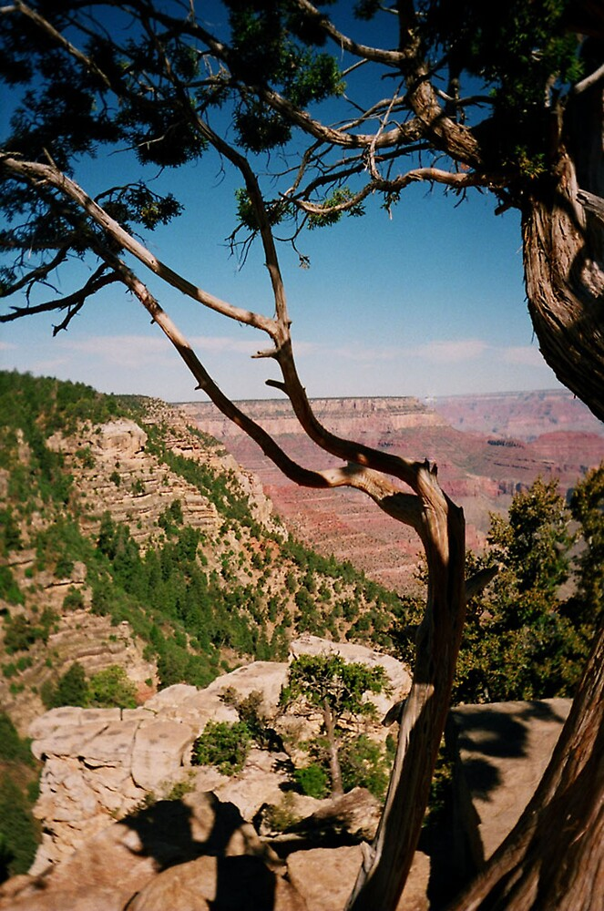 Gnarled Canyon Tree by Geoff McDougall