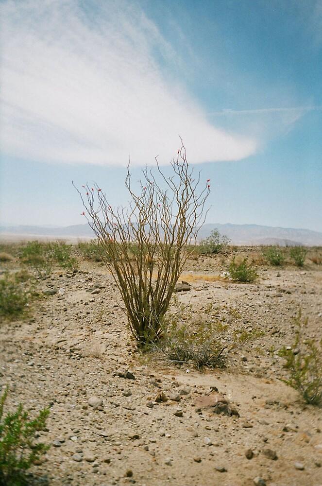 Arizona Desert Tree by Geoff McDougall