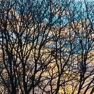 Tree Branches and Colorful Clouds by Bo Insogna