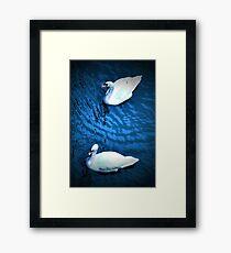 Blue grace Framed Print