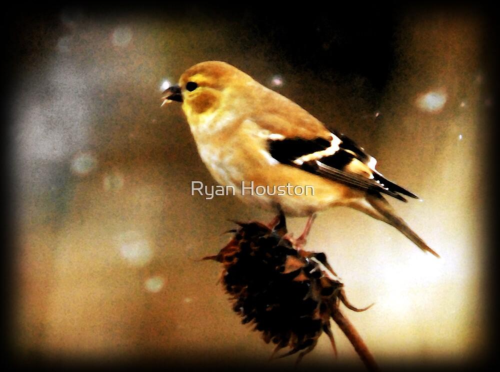American Goldfinch Watercolor by Ryan Houston