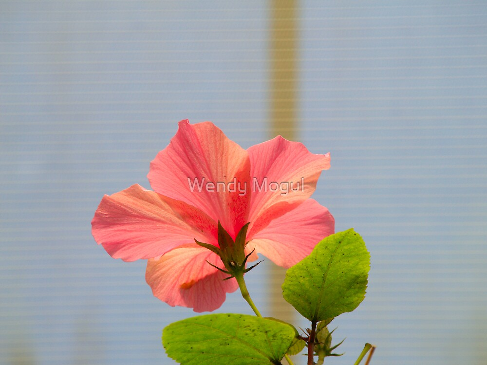 Hibiscus Flower by Wendy Mogul