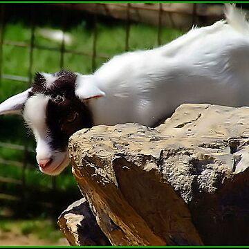 Baby Goat by CJ30