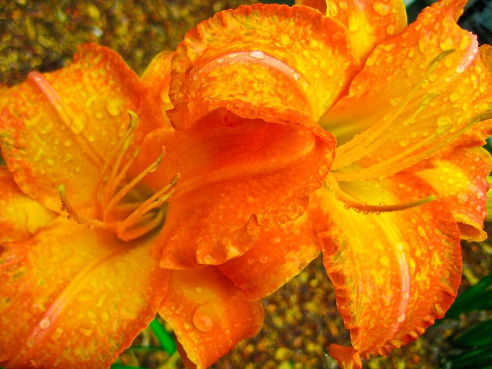 Botanical gardens flower 2 by Michelle Williams