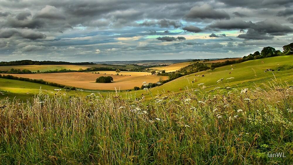 Summer Evening Near Aldworth in Berkshire by IanWL