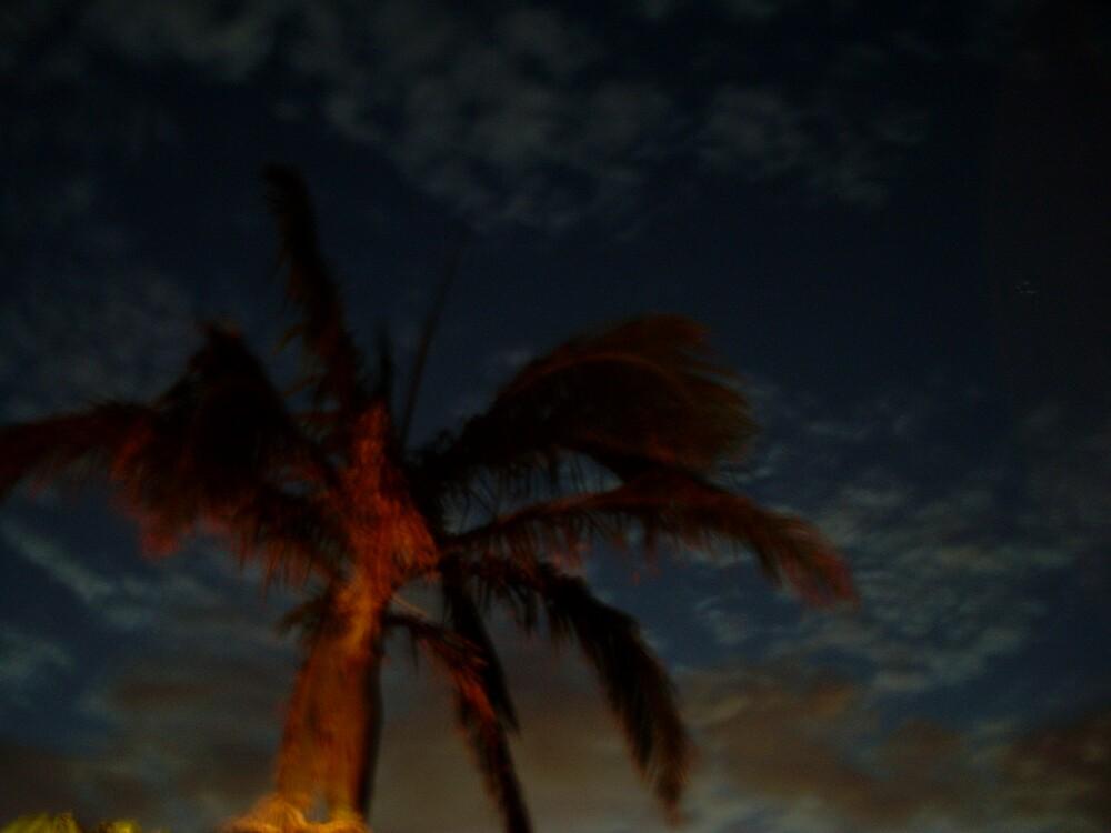 Palm tree at night by oscar