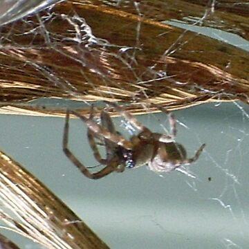 spider by oscar