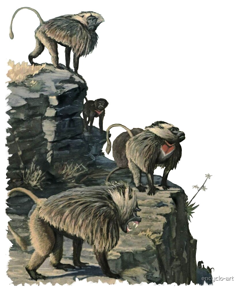 Baboons on Cliffs Primate Natural History Diorama Scene by encyclo-art