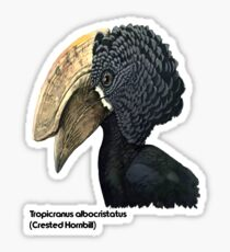 Crested Hornbill Bird Handsome Bill and Feathers Sticker