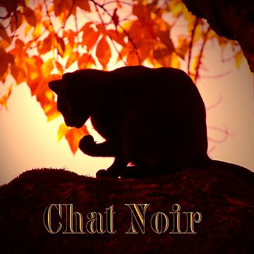 Chat Noir by bjarboe