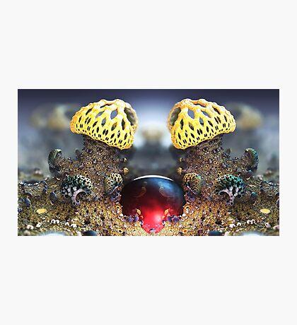 Cranberries in Wonderland Photographic Print