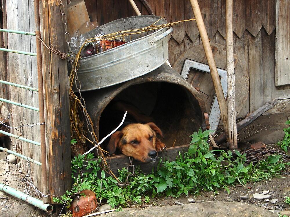 Ukrainian dog by AnnaV