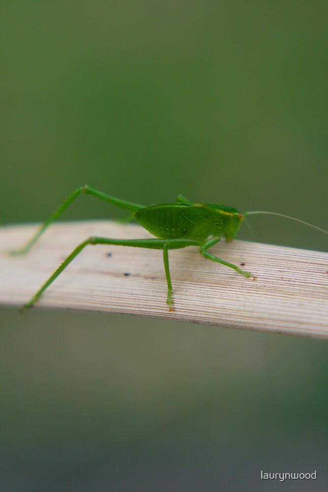 Bug by laurynwood