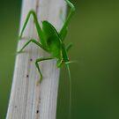 Bug02 by laurynwood