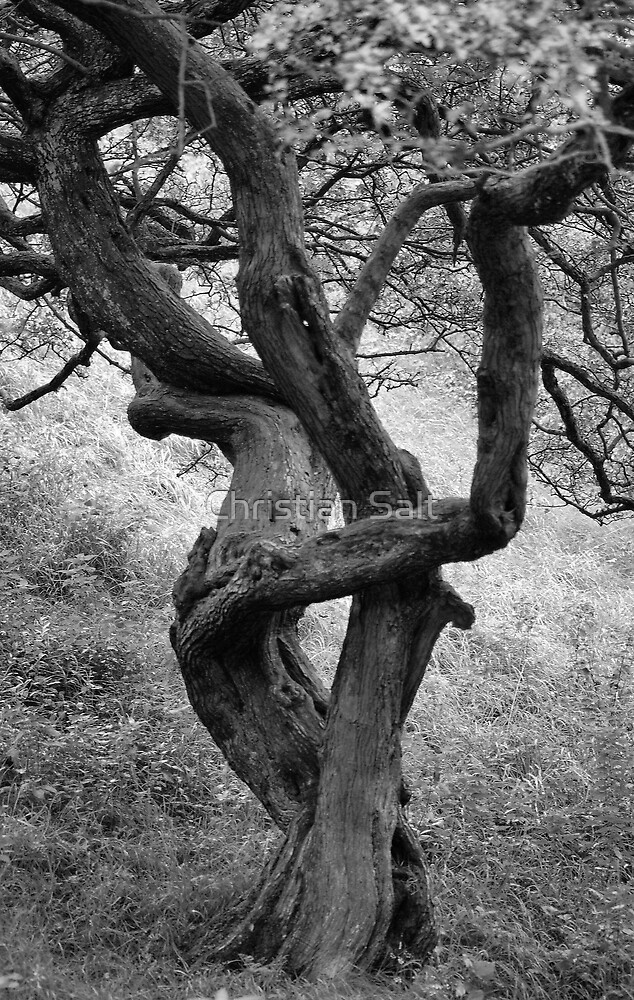 Tree in black and white by Christian Salt