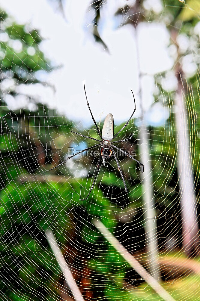 Tree Spider by Barrie Collins