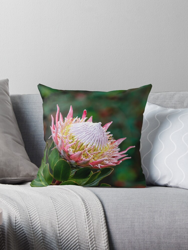 Magnificent Flowering King Protea by Scotch Macaskill