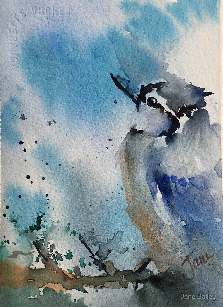 Rainy Blue Jay by Jane Bailey