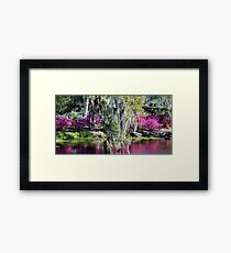 Spanish Moss Beauty Framed Print