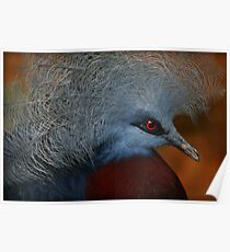 The Common Crowned Pigeon Poster