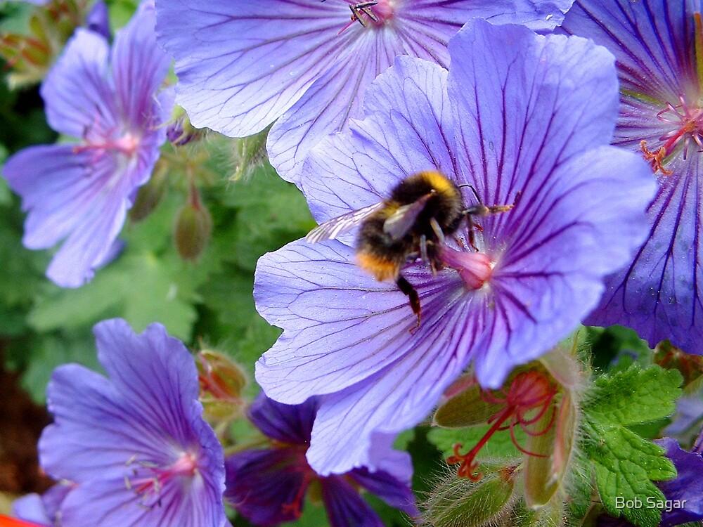 "Geranium Magnificum with ""bonus"" bee by Bob Sagar"