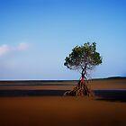 The Mangrove Tree..........Cape Tribulation by Imi Koetz