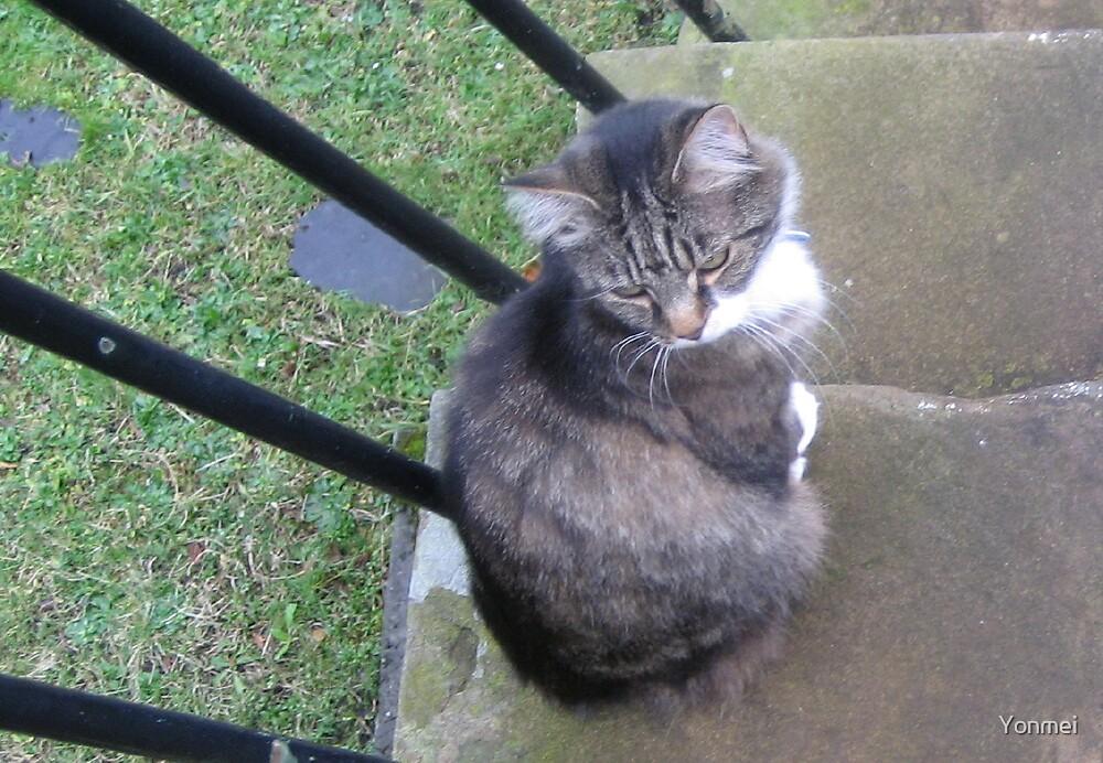 Cat on garden steps by Yonmei