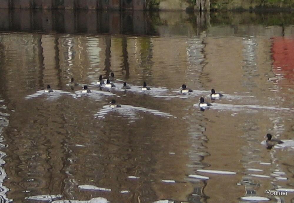 Reflecting ducks by Yonmei